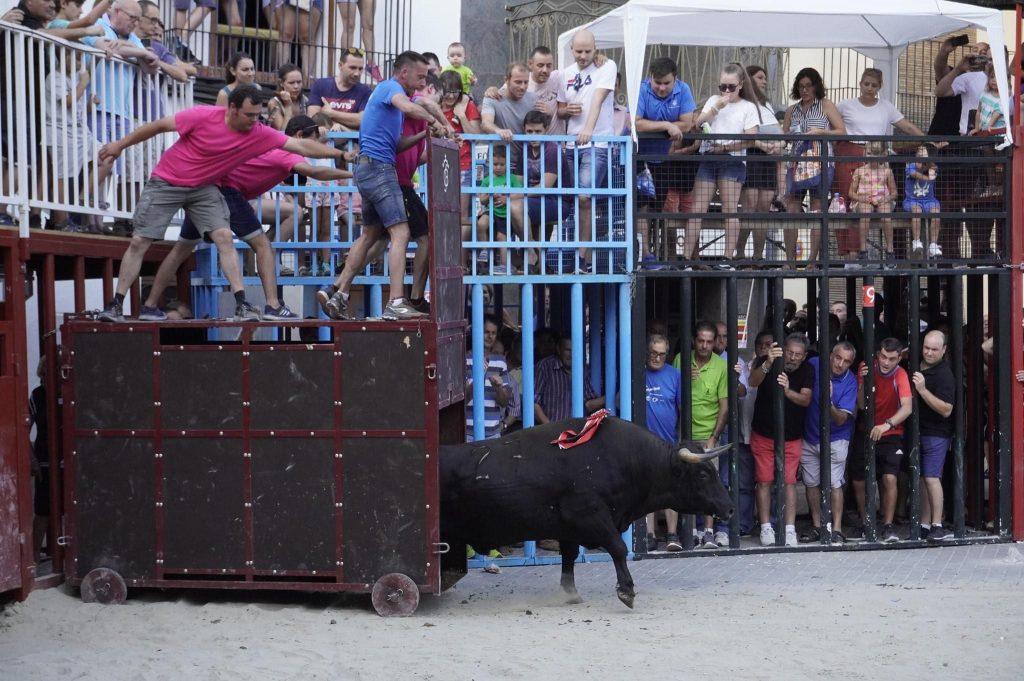 Prova bou feréstec a Vilafamés (Imatge d'arxiu, any 2019)